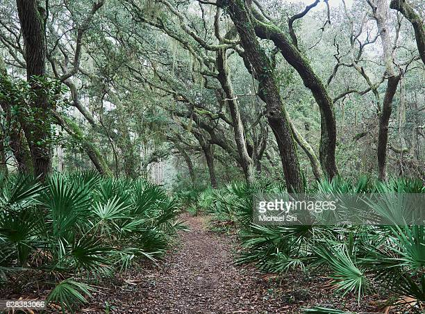hiking trail in the live oak forest deep inside the national wilderness of cumberland island national seashore providing hikers with a zen-like peace, natural beauty and solitude. - cumberland usa - fotografias e filmes do acervo