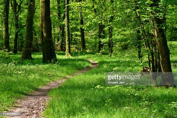 hiking trail inside forest france - national forest stock pictures, royalty-free photos & images