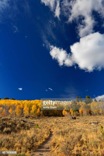 Hiking trail leading to ridge of golden aspens on hillside in Sawtooth Mountains, Stanley, Idaho, autumn evening