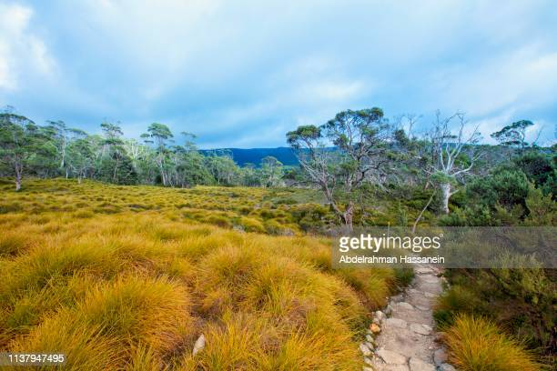 hiking trail near cradle mountain - grass area stock pictures, royalty-free photos & images