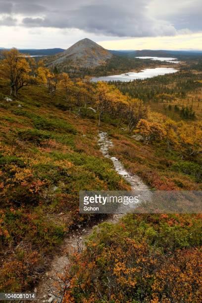 hiking trail on a mountain at femundslia in norway in autumn - tundra foto e immagini stock