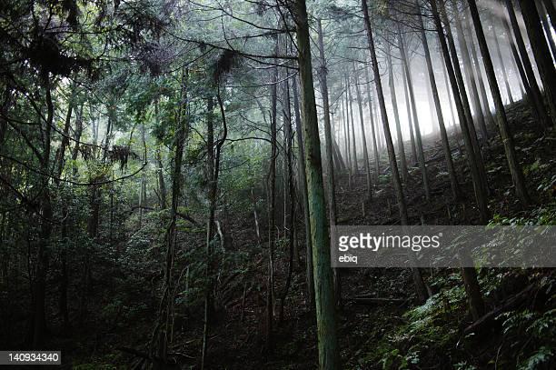 hiking trail - koyasan stock-fotos und bilder