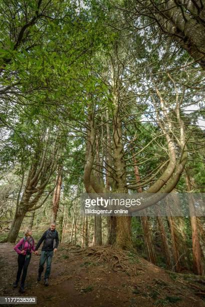 Hiking Trail, QUEIMADAS, Central Mountains, Madeira, Portugal, Wanderweg, Queimadas, Zentralgebirge.