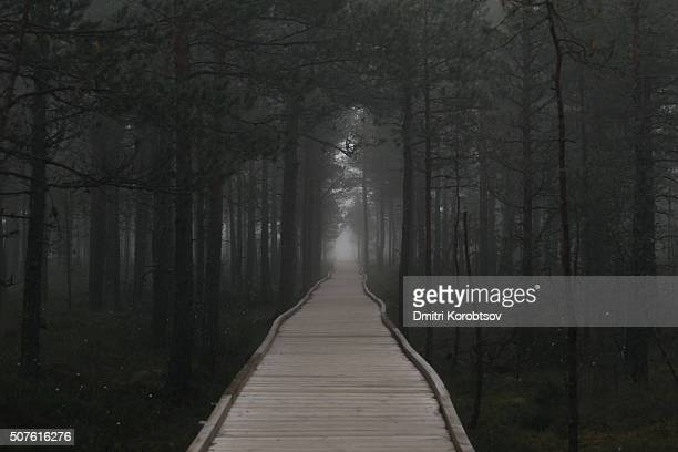 hiking trail through the mysterious forest - harjumaa stock pictures, royalty-free photos & images