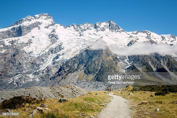 Hiking Trail to Mt Cook, New Zealand