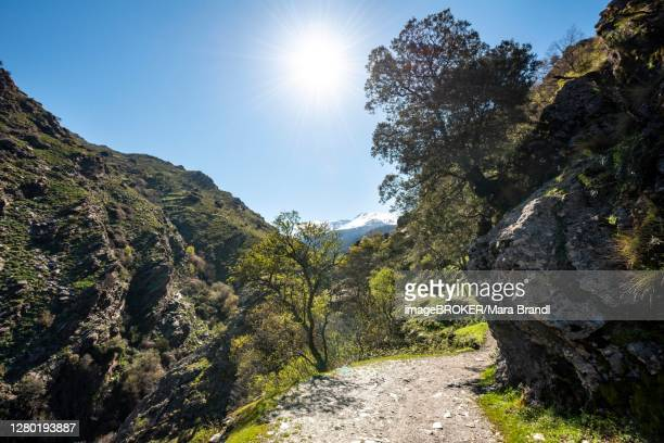 hiking trail vereda de la estrella, sierra nevada, mountains near granada, andalusia, spain - granada provincia de granada stock pictures, royalty-free photos & images