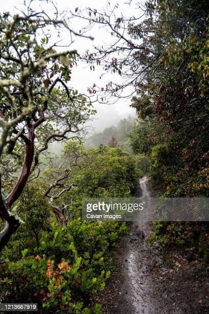 hiking trail weaving through manzanita on foggy mountain side. - manzanita stock pictures, royalty-free photos & images