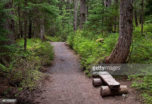 Hiking trail, Winner Creek, Chugach National Forest.