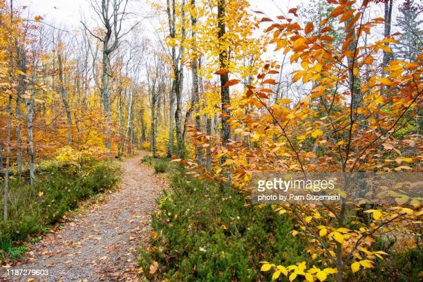 hiking trail with fall foliage, pictured rocks national lakeshore - pictured rocks national lakeshore stock pictures, royalty-free photos & images