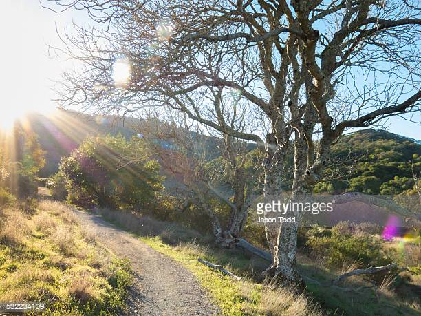 Hiking trail with sunflare through woods