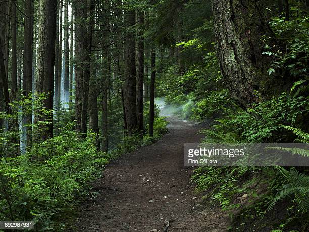 hiking trails - beauty in nature stock pictures, royalty-free photos & images