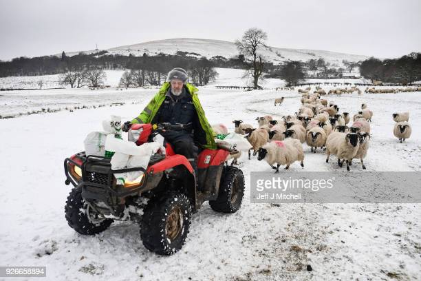 Hill farmer Bobby Lennox feeds his sheep on Shantron and Shemore Farms on March 3 2018 in Luss Scotland Scotland continues to recover from the so...