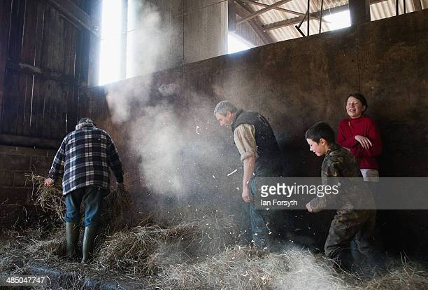 Hill farmer Clive Owen is helped by some of his children to lay down fresh bedding for the sheep at Ravenseat the farm of the Yorkshire Shepherdess...