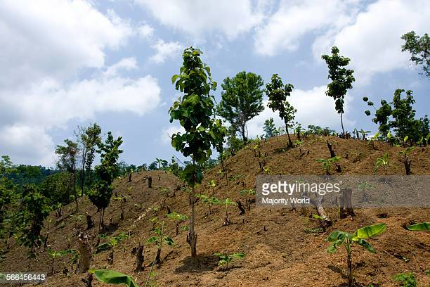 Hill slopes prepared for farming by slashandburn an agricultural technique locally known as Zhum or Zhoom cultivation in Khagrachari Chittagong...
