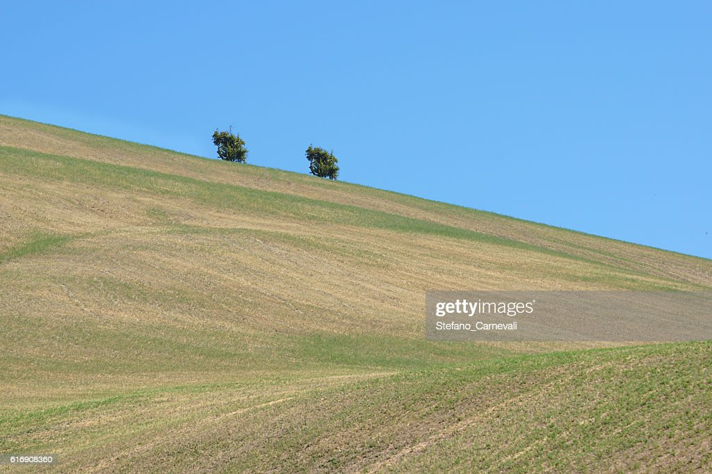 Hill with a tree : Stock Photo