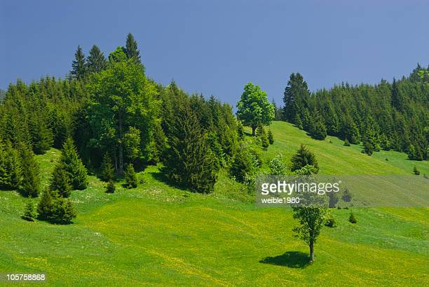 Hill with forest and fields