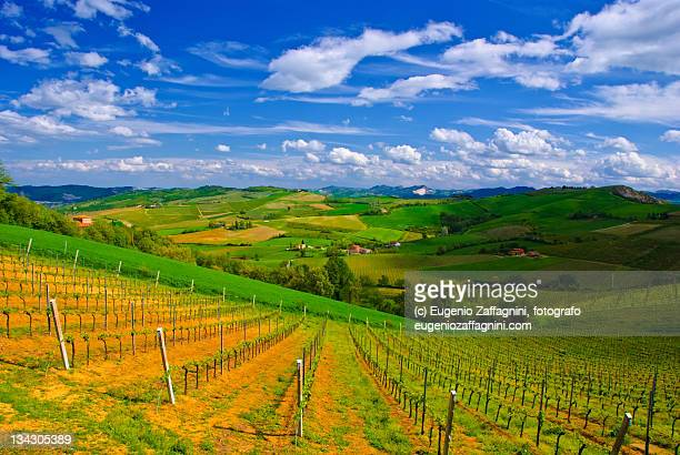 hills and vineyards in romagna - emilia romagna stock photos and pictures