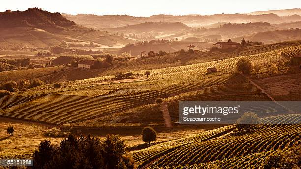 hills at sunset with vineyards and trees - piedmont italy stock photos and pictures