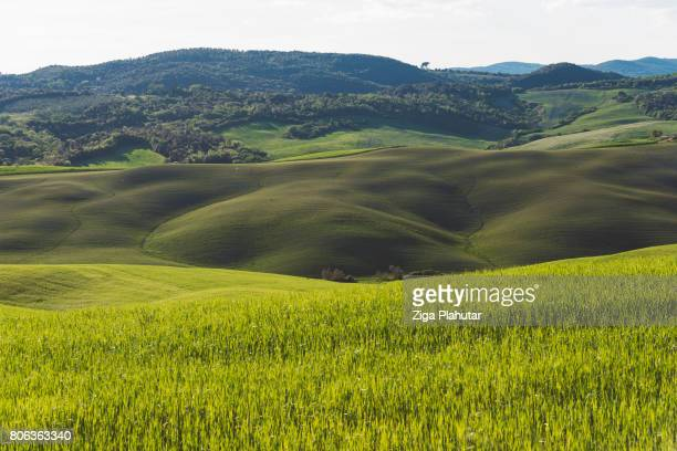 トスカーナのフィールドの丘