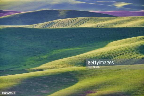 hills of the palouse - don smith imagens e fotografias de stock