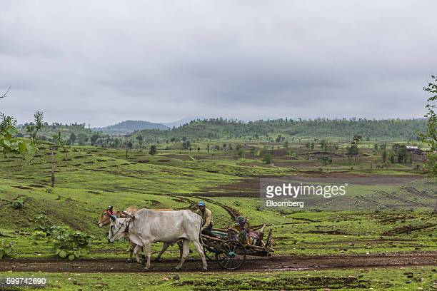 Hills stand pockmarked with rubble masonry and manmade ditches to stop rainwater flows in Dewas Madhya Pradesh India on Monday July 4 2016 Farmers in...
