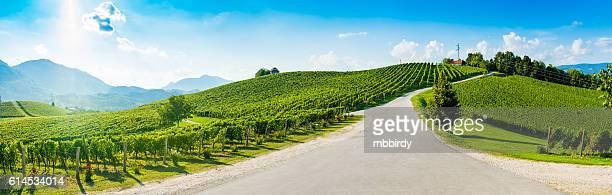 Hills with vineyard