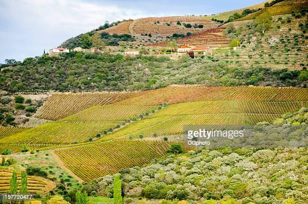 casas rodeada de colinas y viñedos de olivares en autum - ogphoto fotografías e imágenes de stock