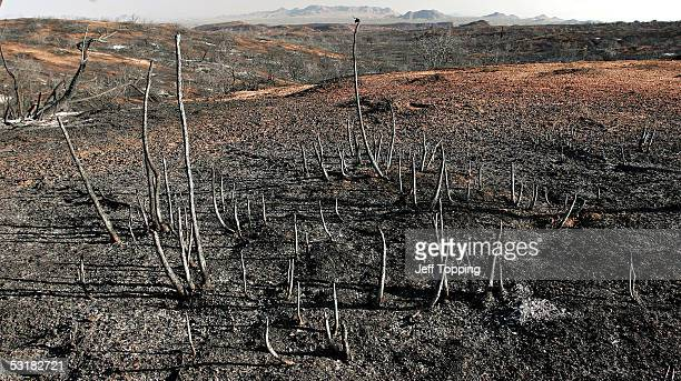 A hillside lays scorched by the Cave Creek Complex fire in the Tonto National Forest 35 miles north of Phoenix near Carefree Arizona July 1 2005 The...