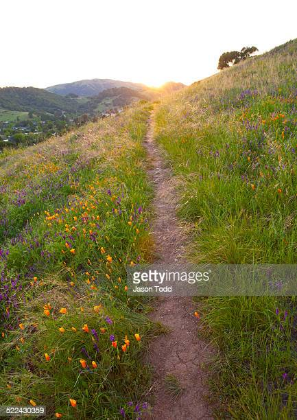 hillside trail with blooming poppy flowers - san rafael california stock pictures, royalty-free photos & images