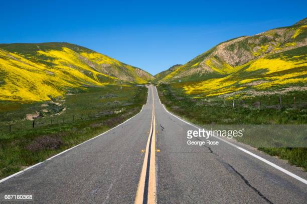 Hillsides and cattle pastures along Highway 58 between Santa Margarita and McKittrick are covered in wildflowers as viewed on March 28 near Carrizo...