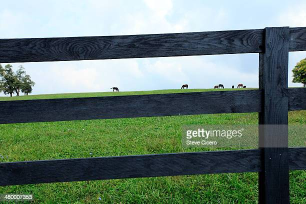 World S Best Wooden Horse Fence Stock Pictures Photos And