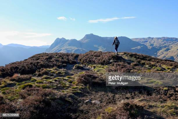 hillwalker at the top of a mountain crest; english lake district, u.k. - english lake district stock photos and pictures