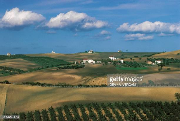 Hilly agricultural landscape near Montenero di Bisaccia, Molise, Italy.