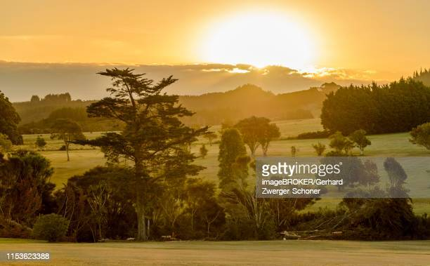 hilly country in evening mood, whangarei district, northland, north island, new zealand - whangarei heads stock-fotos und bilder