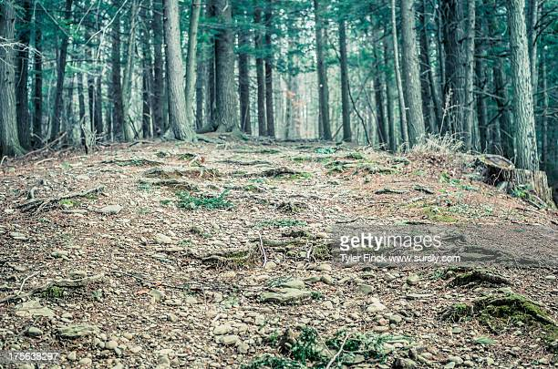hilly forest path - sursly stock pictures, royalty-free photos & images