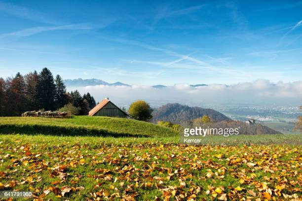 hügelige Landschaft mit Wiesen, Wald, Scheune und Schafe