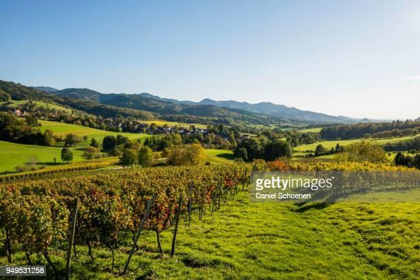hilly landscape with vineyards, hexental, near freiburg im breisgau, markgraeflerland, black forest, baden-wuerttemberg, germany - freiburg im breisgau stock-fotos und bilder