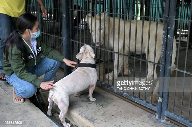 Hima the defanged lion interacts at a pet dog through cage bars at Tamao zoo in Takeo province, before its controversial return home to Phnom Penh,...