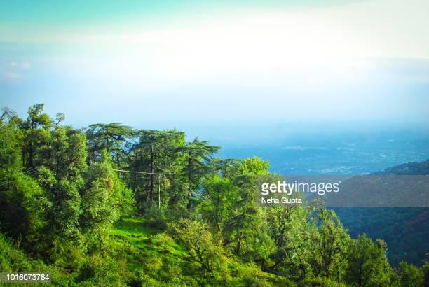 Himalayan subtropical pine forest