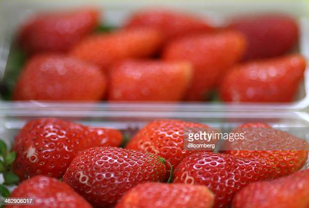 Himebijin strawberries sit in trays at Okuda Farm in Hashima, Gifu Prefecture, Japan, on Tuesday, Jan. 14, 2013. The farm this month began harvesting...