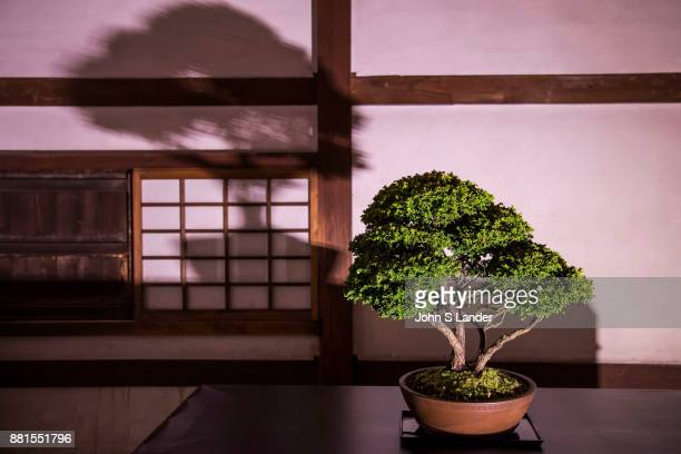 Himeji Castle Saijiki Art Exhibition Bonsai Bonsai is a Japanese art form using miniature trees The Japanese tradition originally coming from Chinese...