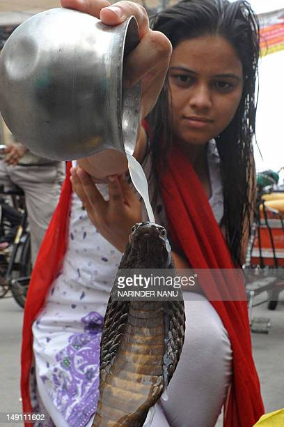 A Hindu devotee pours milk over a cobra during Nag Panchami outside a temple in Amritsar on July 23 2012 The Hindu festival of Nag Panchami observed...