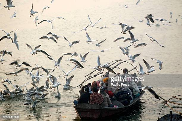Hindu devotees feed Siberian birds at the Yamuna on a foggy weather morning in Allahabad where the migratory birds are seen in thousand flocks.