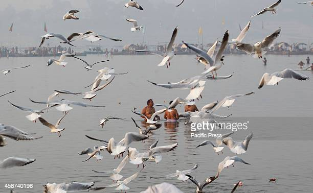 Hindu devotees feed the Siberian migratory birds in river Ganga early in the morning at Allahabad