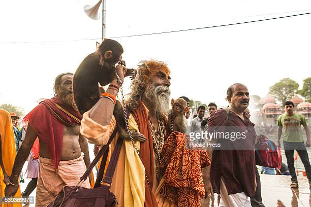 Hindu Monk is going to take the holy dip along with his monkey in the morning on the bank of scared river Shipra, also known as Kshipra on the...