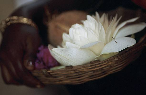 Hindu offering lotus flower coconut and rose in india pictures lotus flower coconut and rose in india mightylinksfo