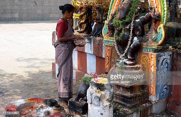 hindu woman is praying in the temple, madurai, india - hinduism bildbanksfoton och bilder