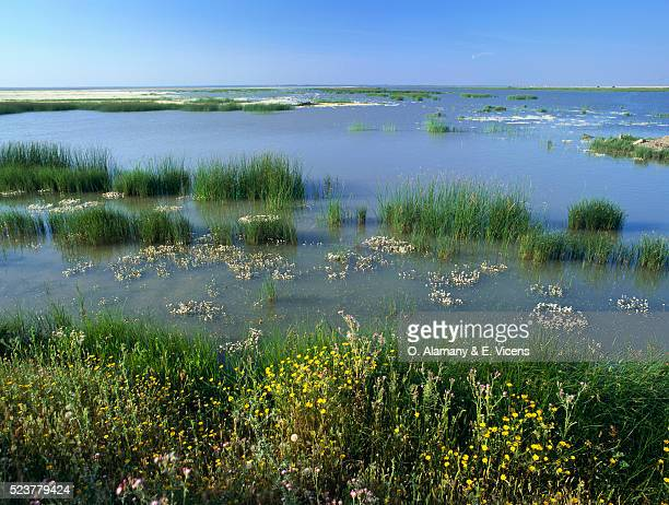 Hinojos Marshes in Spain
