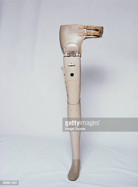 Hip and leg prosthesis