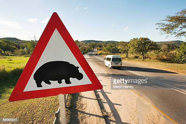 hippopotamus crossing sign next to main road. - animal crossing stock pictures, royalty-free photos & images